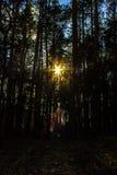 Солнце делает свой путь через лес Стоковые Фото