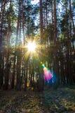 Солнце делает свой путь через лес Стоковое Изображение