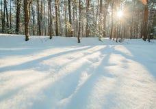 Солнце заморозка зимы леса снега утра Стоковое фото RF
