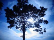 Солнце играя прятк с природой Стоковые Фото