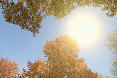 солнце листьев осени Стоковое фото RF