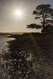 Солнце и дерево на береге Стоковые Фотографии RF