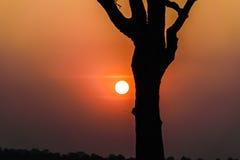 Солнце и дерево стоковое изображение rf