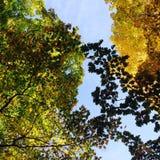 Солнце и листья Стоковое Изображение RF