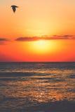 Солнце и птица моря стоковые изображения