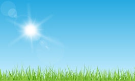 Солнце и трава Стоковое Изображение