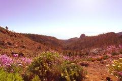 Солнце и цветки утра на вулканических Канарских островах поля Стоковые Фото