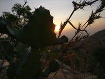 Солнце кактуса пряча Стоковое Изображение