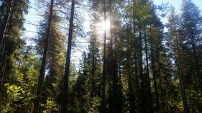 Солнце между деревьями Стоковые Изображения