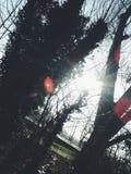 Солнце между деревьями Стоковая Фотография