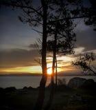Солнце между хоботами Стоковая Фотография