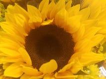 Солнце моего солнца Стоковое Изображение RF