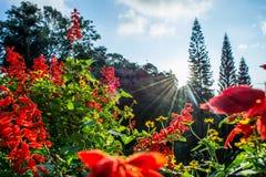 Солнце на цветке Стоковое Изображение