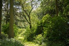 Солнце ломает на красивом пути в лесе Стоковые Изображения