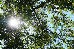 Солнце осветило от предпосылки ветви дерева Стоковые Фото