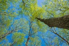 Солнце осветило сень дерева стоковая фотография rf