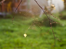 Солнце освещает сеть паука на восходе солнца стоковое фото