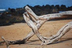 Солнце отбелило дерево Стоковое Изображение