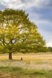Солнце после полудня получает через зеленое дерево стоковое фото