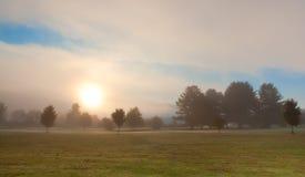 Солнце поднимает над деревьями на туманном утре Стоковые Изображения RF