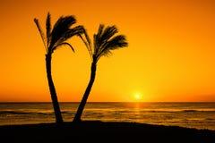 Солнце под пальмами Стоковое фото RF