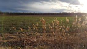 Солнце поля природы Стоковая Фотография