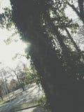 Солнце пряча за деревом Стоковая Фотография