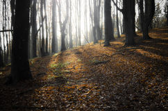 Солнце светя в лесе в осени Стоковое фото RF
