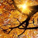 Солнце светя в золотой осени Стоковая Фотография RF