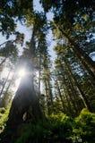 Солнце светя за деревом Стоковое Изображение RF