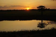 Солнце, свет дня Стоковое Изображение