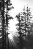 Солнце, туман, и лес Стоковая Фотография RF