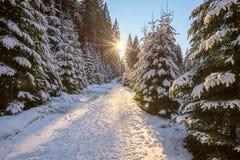 Солнце устанавливает над дорогой в coniferous лесе Стоковая Фотография