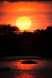 Солнце устанавливая над silhouetted деревьями и островом Стоковая Фотография