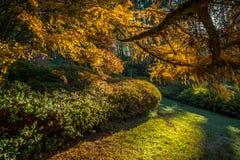 Солнце установили и желтый цвет осени Стоковая Фотография