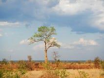 Солнце установило в глубокую саванну, bushveld kruger, национальный парк Kruger, ЮЖНУЮ АФРИКУ Стоковое Изображение RF