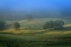 Солнце утра на деревьях Стоковое Изображение