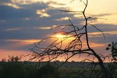 Солнце утра через ветви дерева Стоковое фото RF