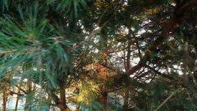 Солнце через ветви деревьев сток-видео