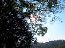 Солнце через деревья Стоковые Изображения