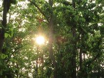Солнце через деревья Стоковая Фотография