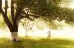 солнце через лес Стоковая Фотография