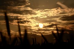 Солнце через поле зерна Стоковое Изображение RF