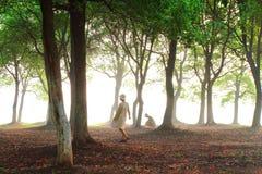 солнце через древесины Стоковые Изображения RF