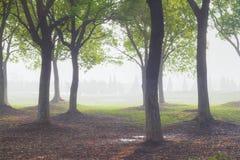 солнце через древесины Стоковые Фото
