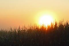 Солнце через туман Стоковые Фото