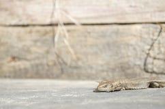 Солнце ящерицы лежа Стоковое Изображение RF