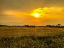 солнце Стоковое фото RF