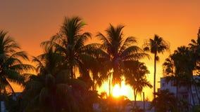 Солнце Miami Beach вниз в заходе солнца 4k Флориде США пальмы акции видеоматериалы