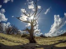 Солнце peeking через дерево Стоковая Фотография